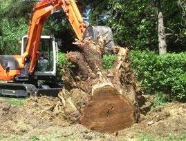 Dessouchage d 39 arbres rh ne alpes lyon grenoble savoie grde - Produit destructeur de souche d arbre ...